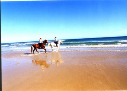Enjoy a horse ride along Stockton Beach